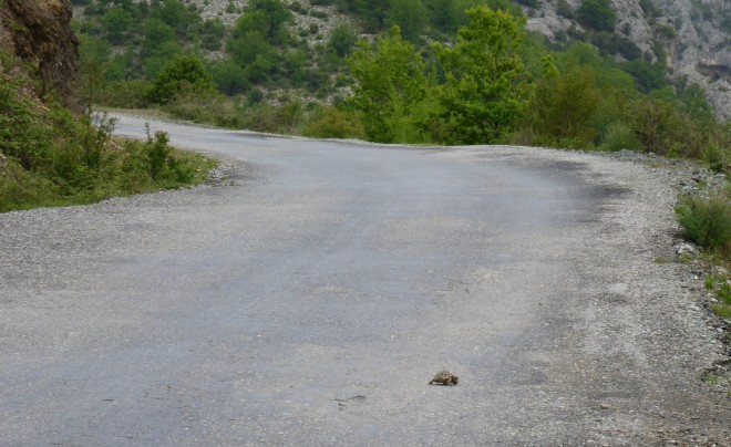 A turtle passing by!