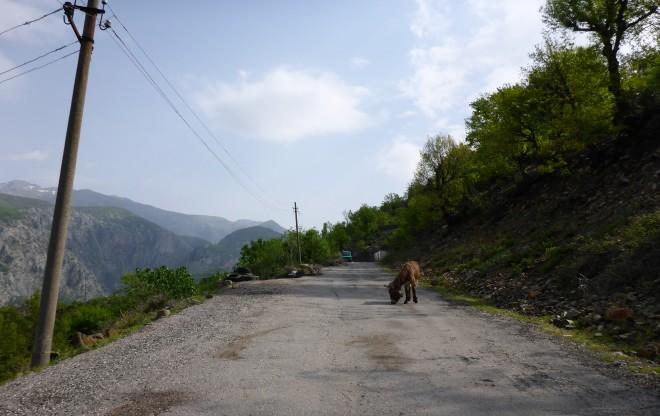 Donkey on the road to Koman Lake.