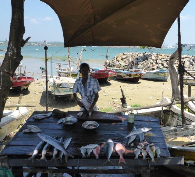 Fisherman selling his fish outside the walls of Galle Fort.