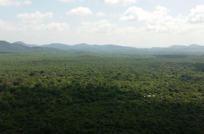 Green, green view seen from Pidurangala Rock