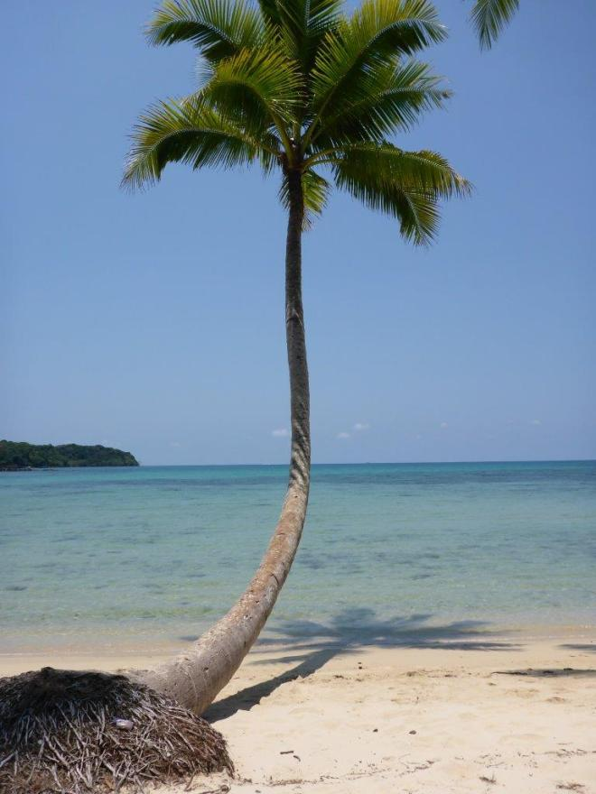 Palm at the beach at Dusita Resort, Koh Kood