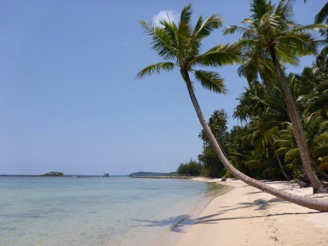 Palms at the beach at Dusita Resort, Koh Kood