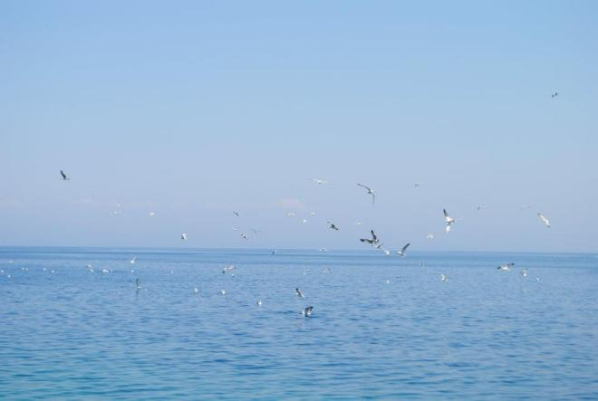 Seagulls at Vis Island, Croatia