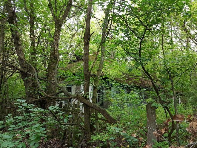 Nature has totally taken over the houses. Zalissya, Chernobyl, Ukraine
