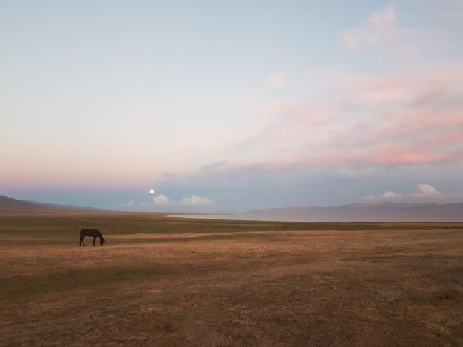 Horse in sunset with the full moon. Three day horse-riding trip to Song Kul, Kyrgyzstan.