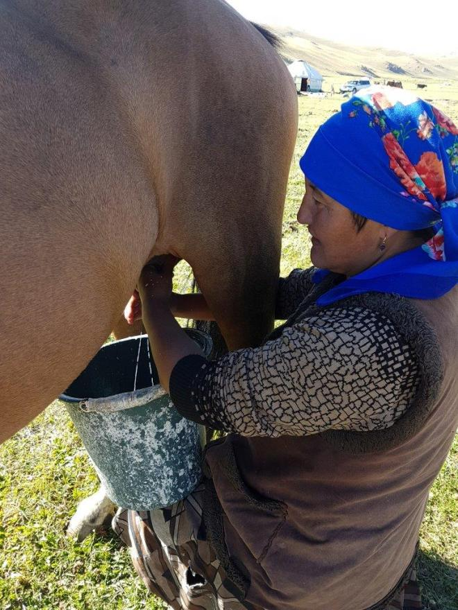 Mare's milk. Three day horse-riding trip to Song Kul, Kyrgyzstan.