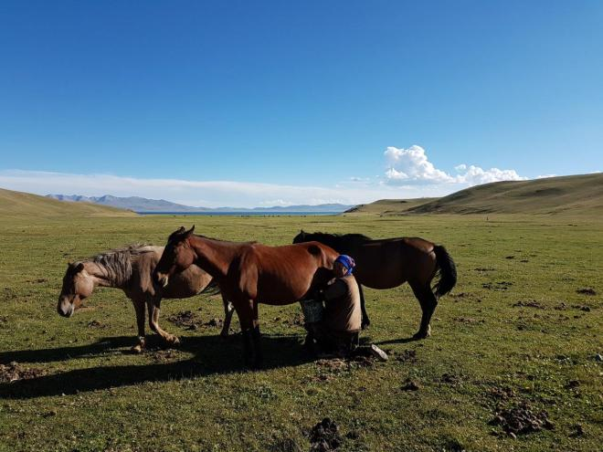 More mare's milking in beautiful surroundings. Three day horse-riding trip to Song Kul, Kyrgyzstan.