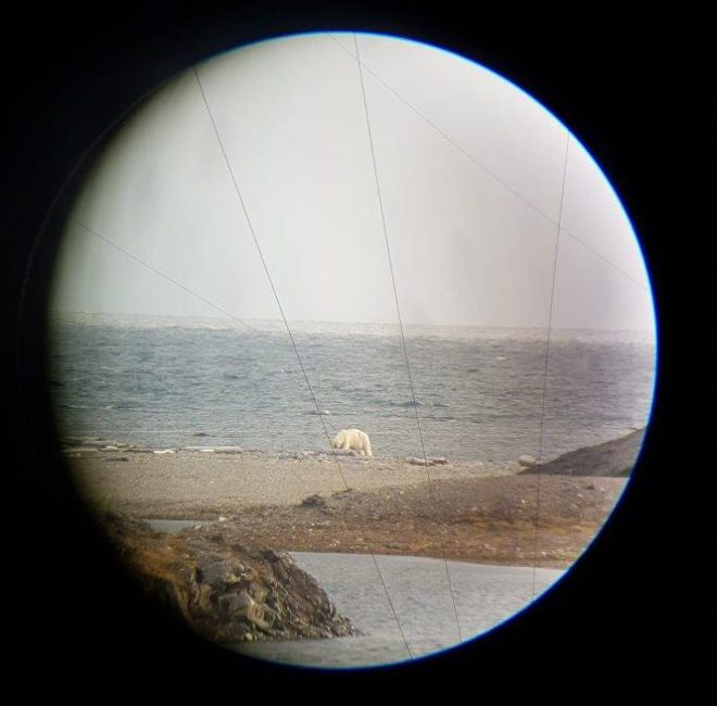 Papa bear is waking up. Isfjord Radio, Svalbard, Norway.